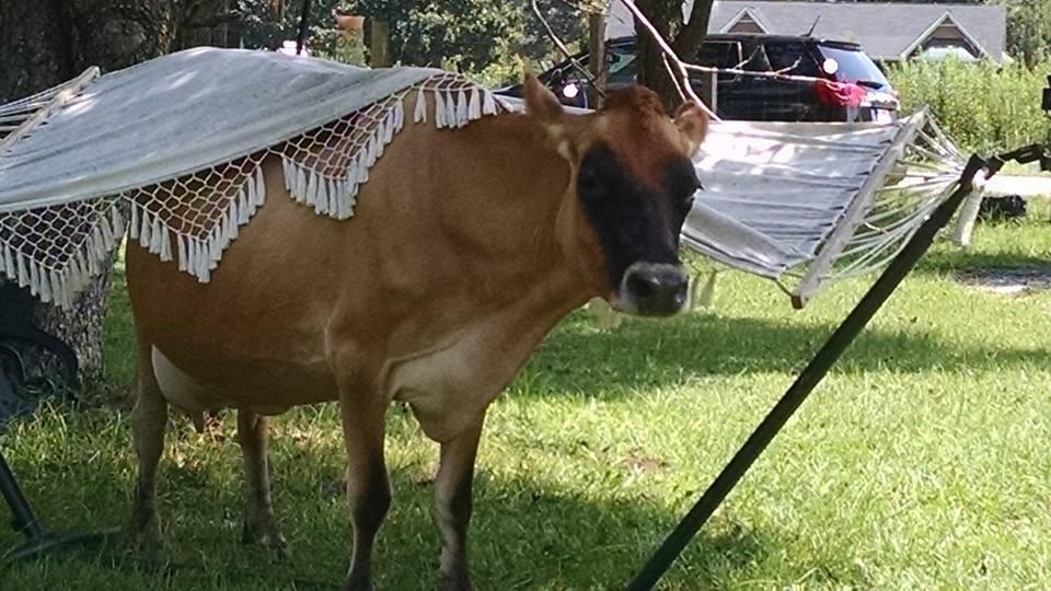 sweetie hammock